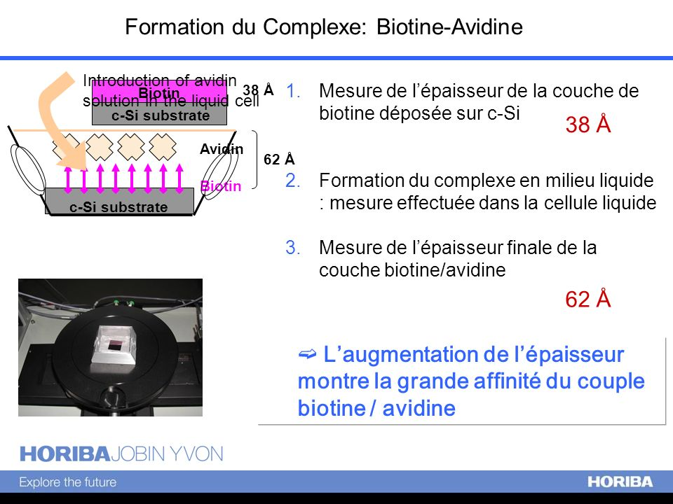 Formation du Complexe: Biotine-Avidine