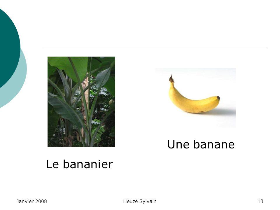 Une banane Le bananier Janvier 2008 Heuzé Sylvain