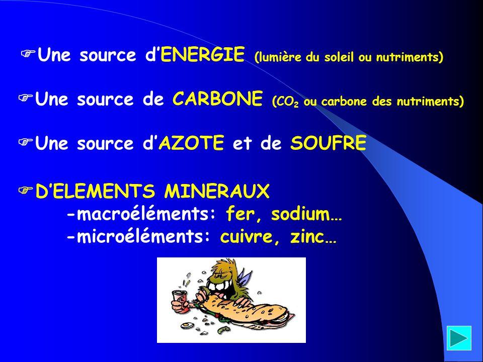 Une source d'ENERGIE (lumière du soleil ou nutriments)