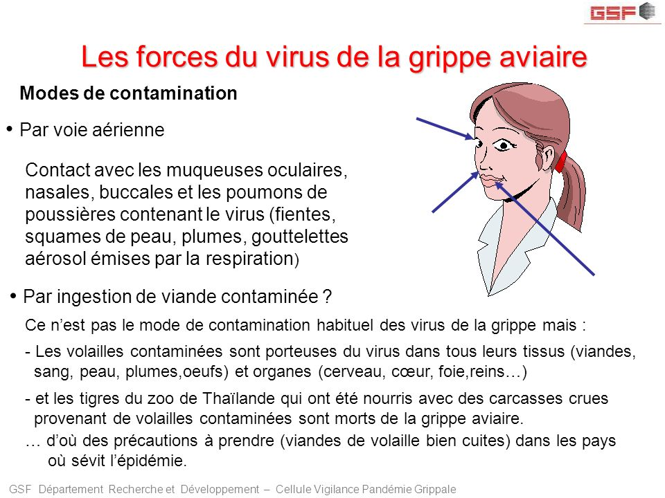 Les forces du virus de la grippe aviaire