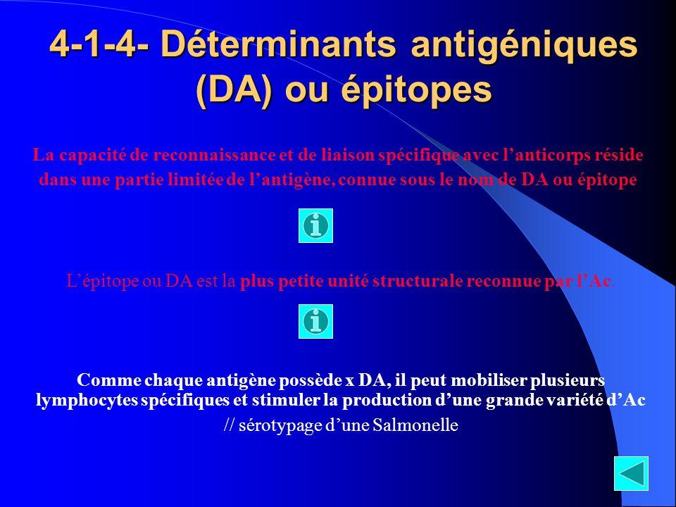 4-1-4- Déterminants antigéniques (DA) ou épitopes