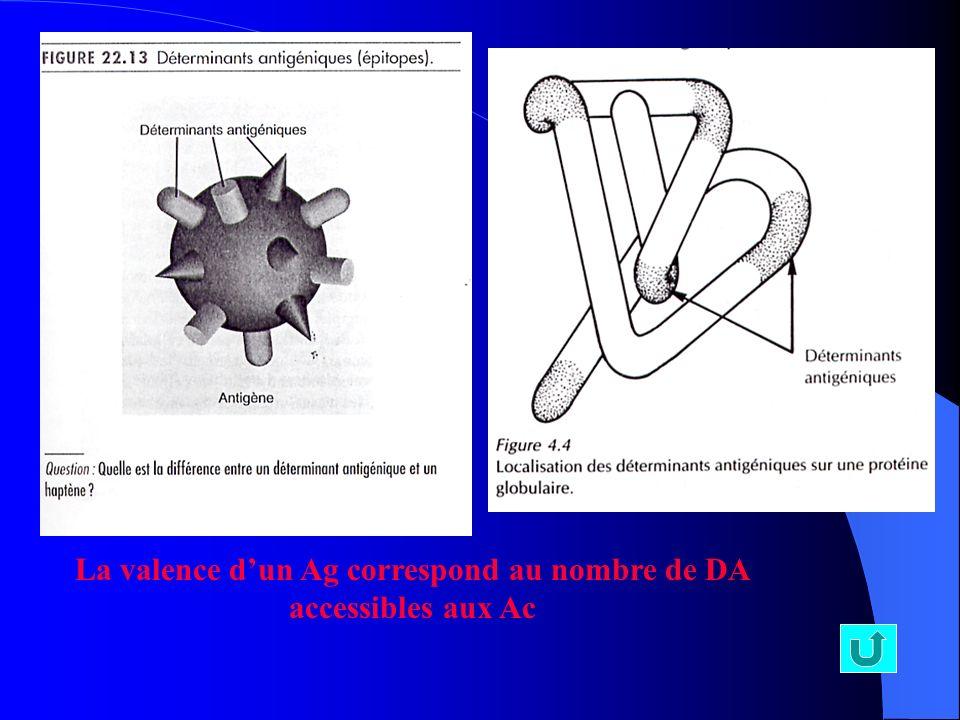 La valence d'un Ag correspond au nombre de DA accessibles aux Ac