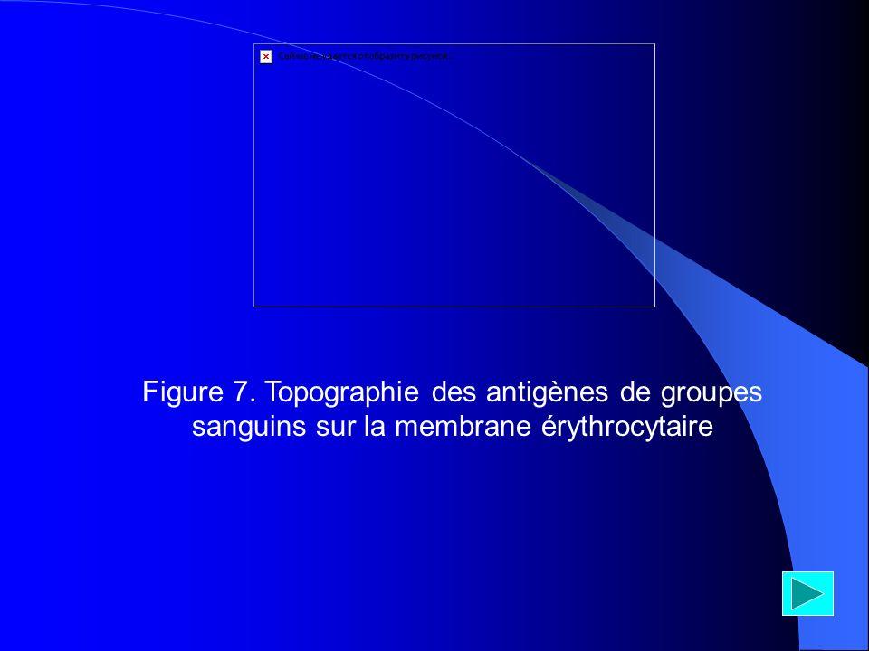 Figure 7. Topographie des antigènes de groupes sanguins sur la membrane érythrocytaire
