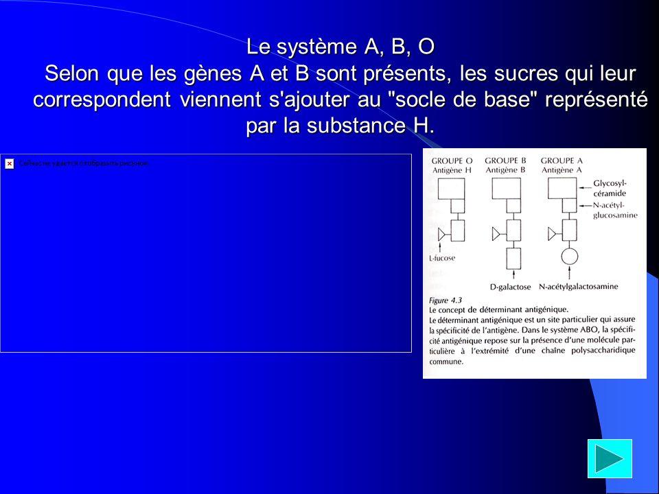 Le système A, B, O Selon que les gènes A et B sont présents, les sucres qui leur correspondent viennent s ajouter au socle de base représenté par la substance H.