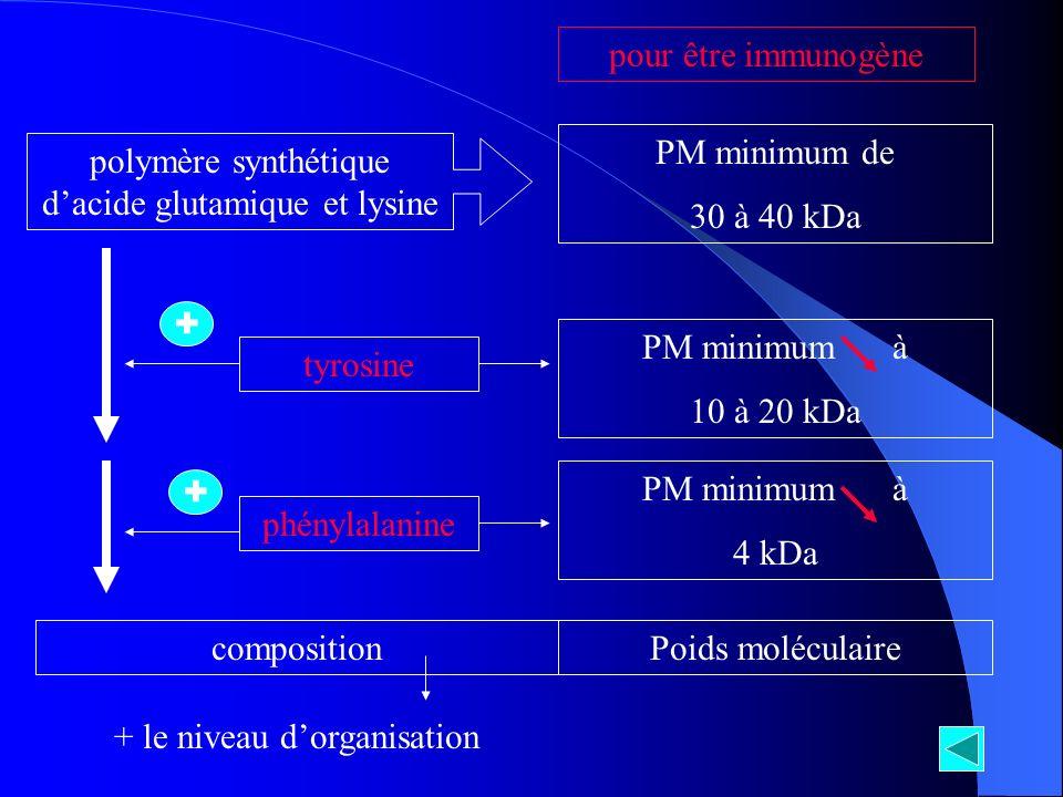 + + pour être immunogène PM minimum de 30 à 40 kDa