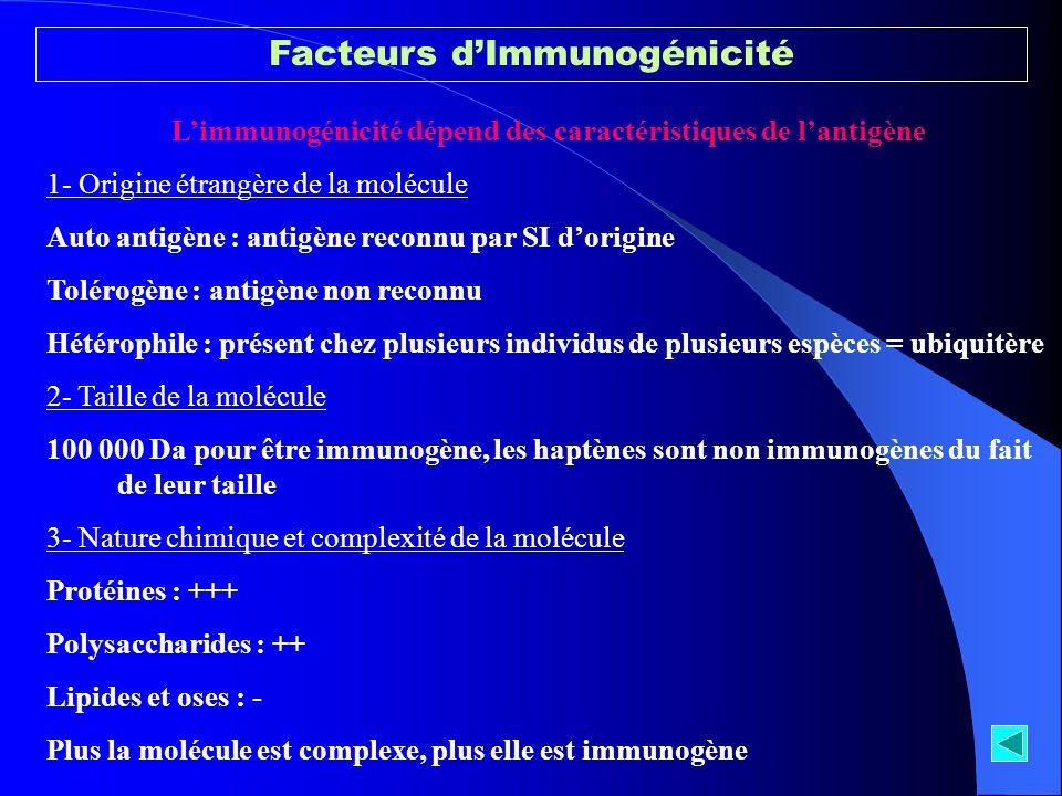 L'immunogénicité dépend des caractéristiques de l'antigène