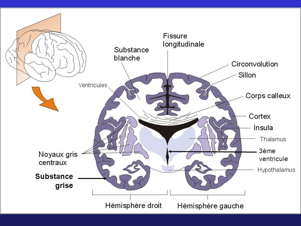 3ème ventricule Substance grise