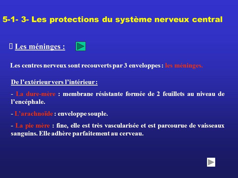 5-1- 3- Les protections du système nerveux central