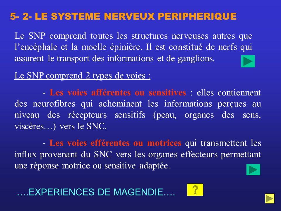 5- 2- LE SYSTEME NERVEUX PERIPHERIQUE