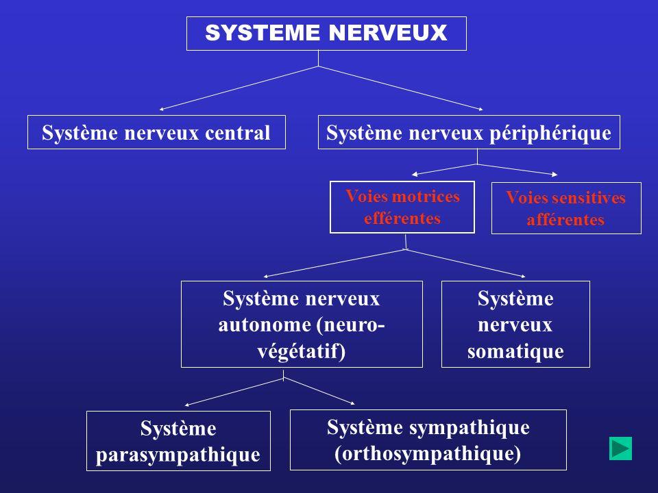 Système nerveux central Système nerveux périphérique