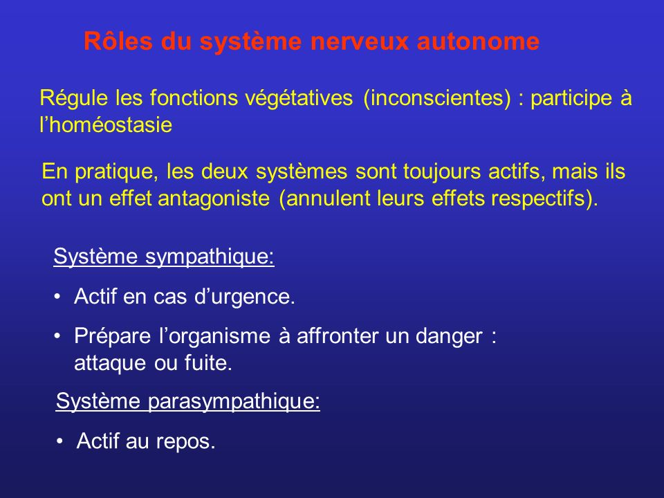 Rôles du système nerveux autonome