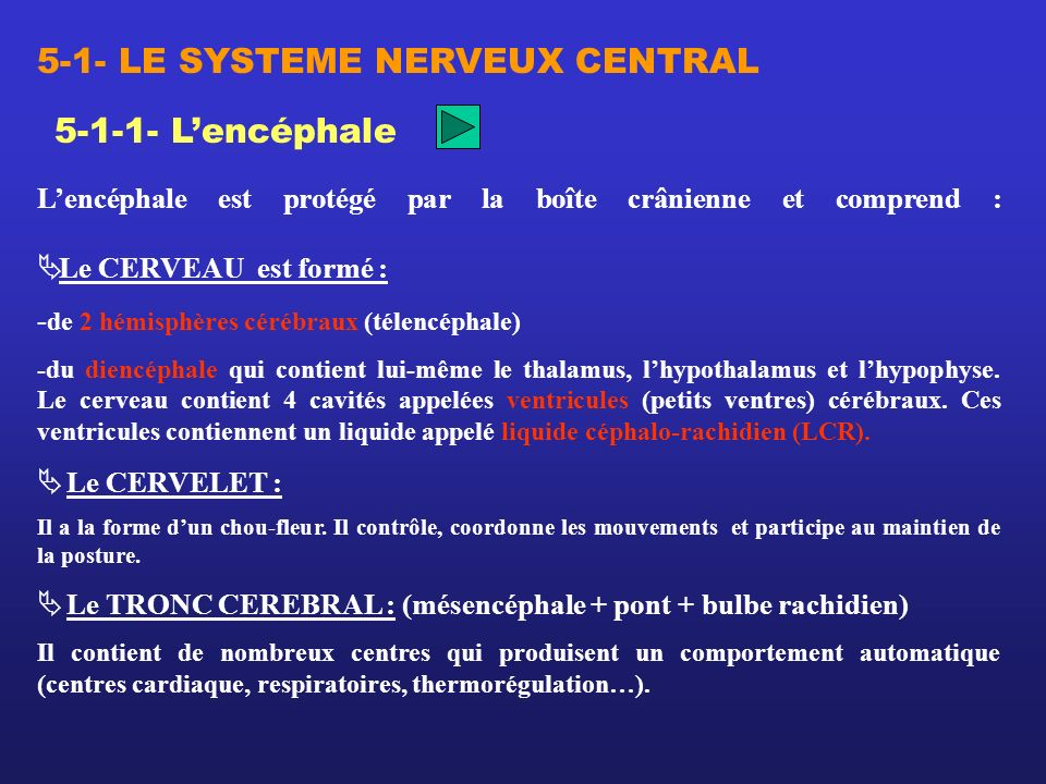 5-1- LE SYSTEME NERVEUX CENTRAL
