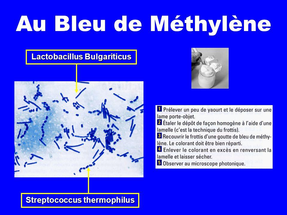 Lactobacillus Bulgariticus Streptococcus thermophilus