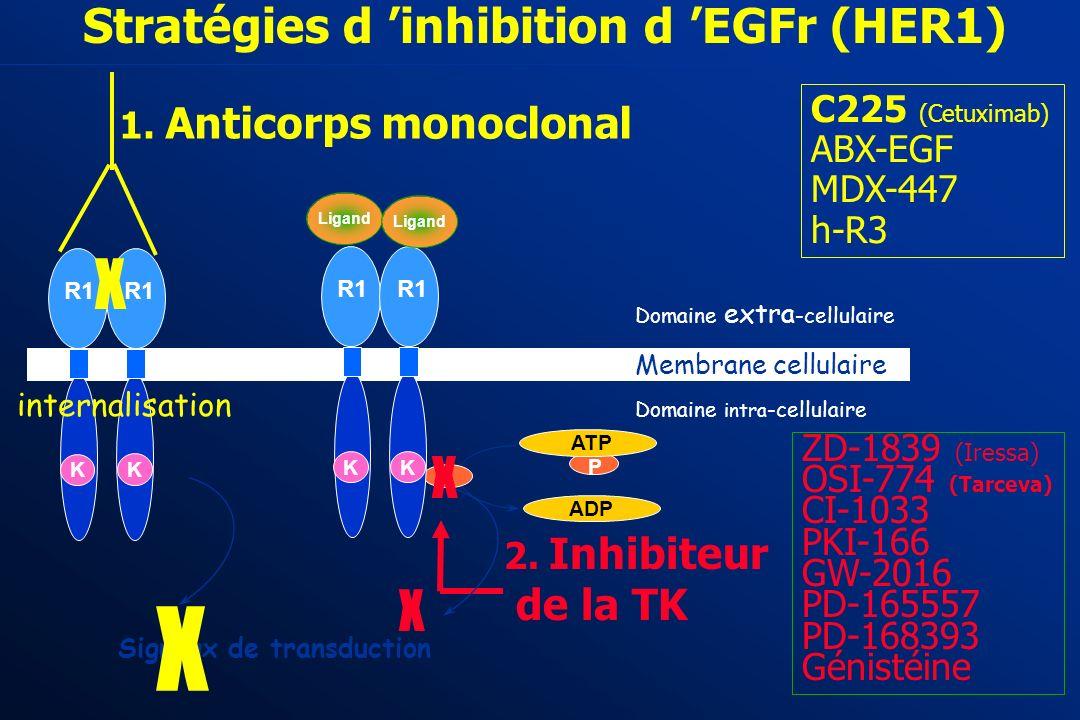 Stratégies d 'inhibition d 'EGFr (HER1)