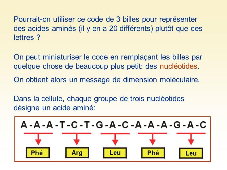 Pourrait-on utiliser ce code de 3 billes pour représenter des acides aminés (il y en a 20 différents) plutôt que des lettres