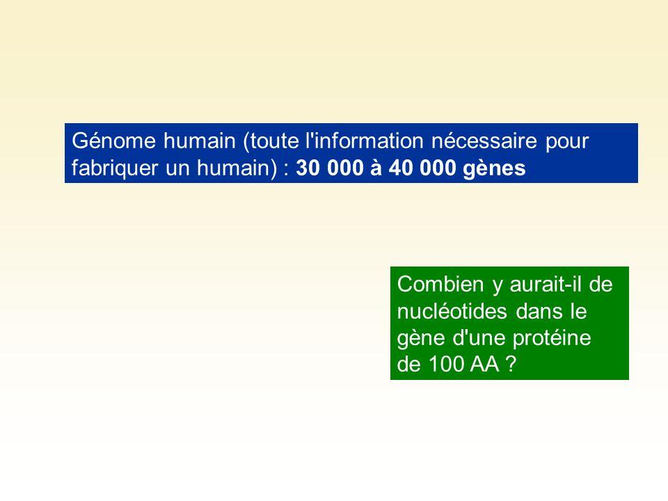 Génome humain (toute l information nécessaire pour fabriquer un humain) : 30 000 à 40 000 gènes