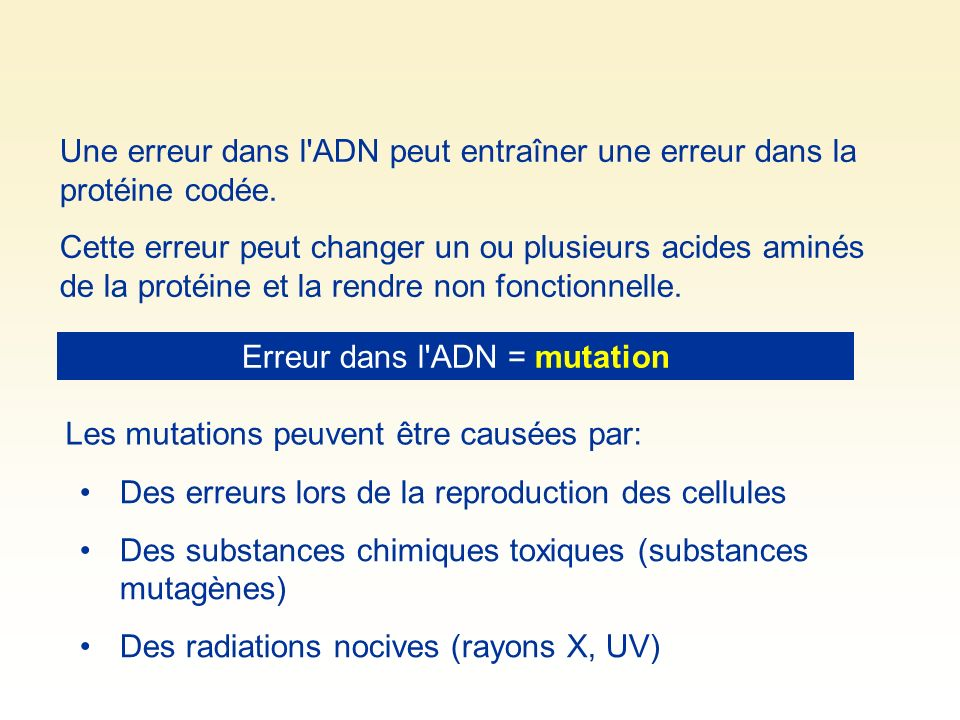 Erreur dans l ADN = mutation