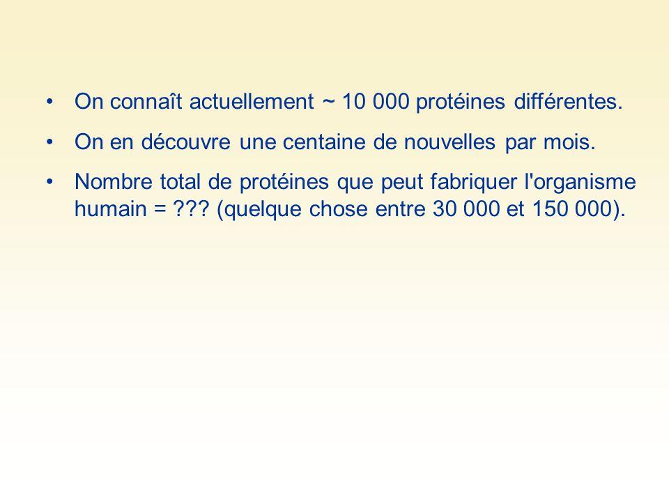 On connaît actuellement ~ 10 000 protéines différentes.