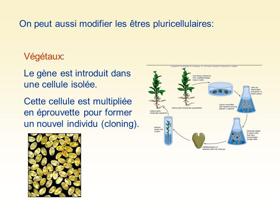 On peut aussi modifier les êtres pluricellulaires: