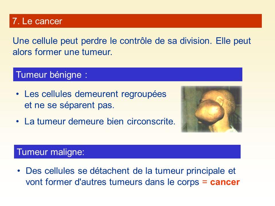 7. Le cancer Une cellule peut perdre le contrôle de sa division. Elle peut alors former une tumeur.