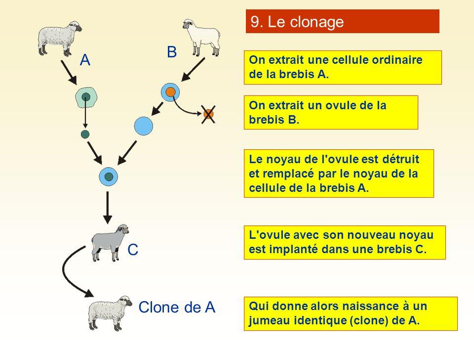 9. Le clonage B A C Clone de A