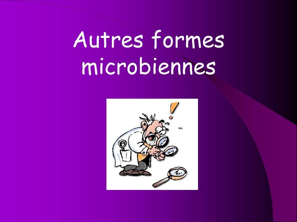 Autres formes microbiennes