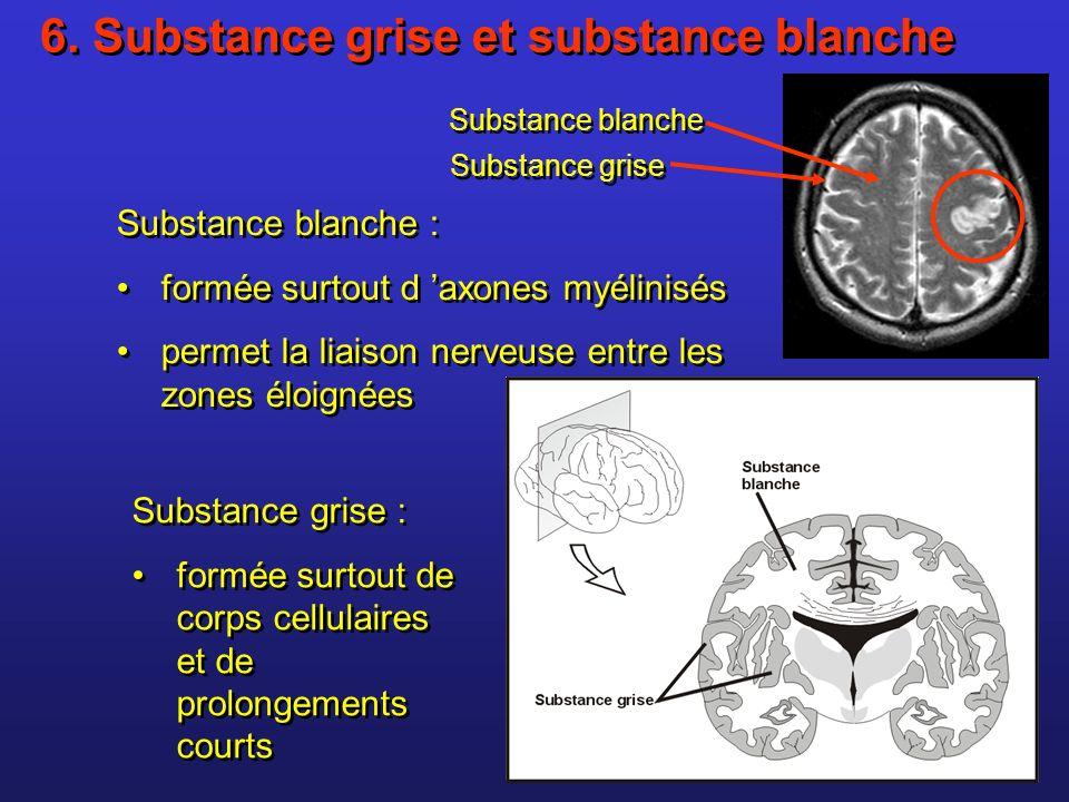 6. Substance grise et substance blanche