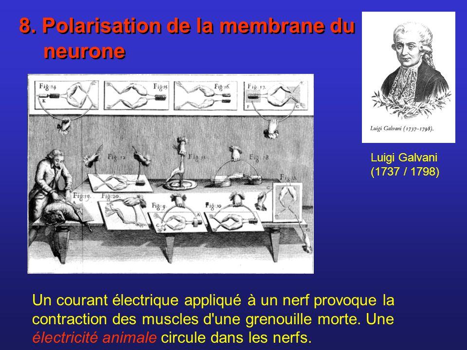8. Polarisation de la membrane du neurone