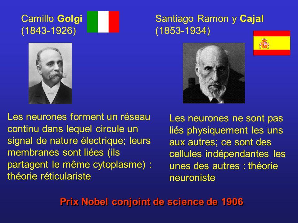 Camillo Golgi (1843-1926) Santiago Ramon y Cajal (1853-1934)