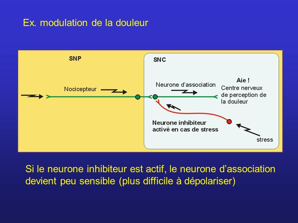 Ex. modulation de la douleur