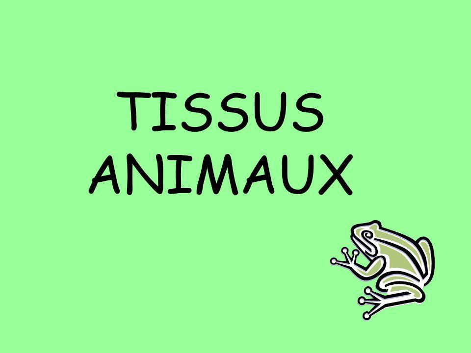 TISSUS ANIMAUX