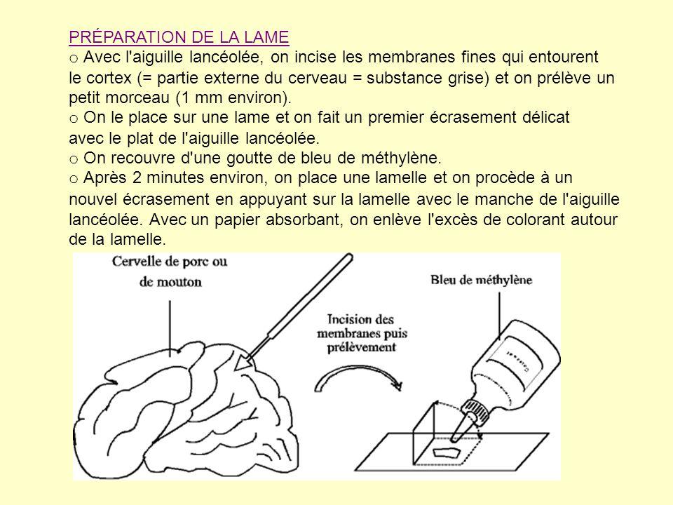 PRÉPARATION DE LA LAME