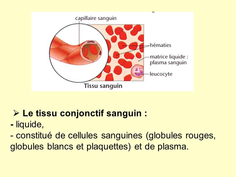  Le tissu conjonctif sanguin : - liquide, - constitué de cellules sanguines (globules rouges, globules blancs et plaquettes) et de plasma.