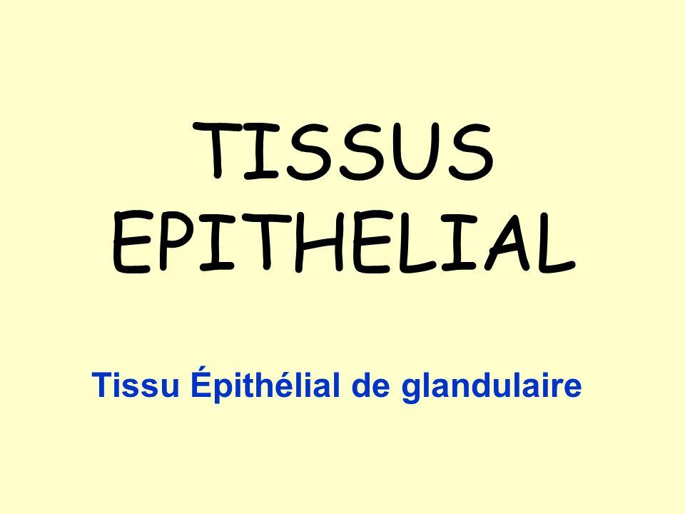 Tissu Épithélial de glandulaire