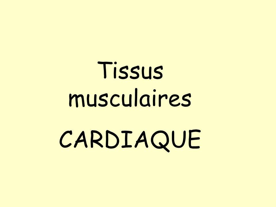 Tissus musculaires CARDIAQUE