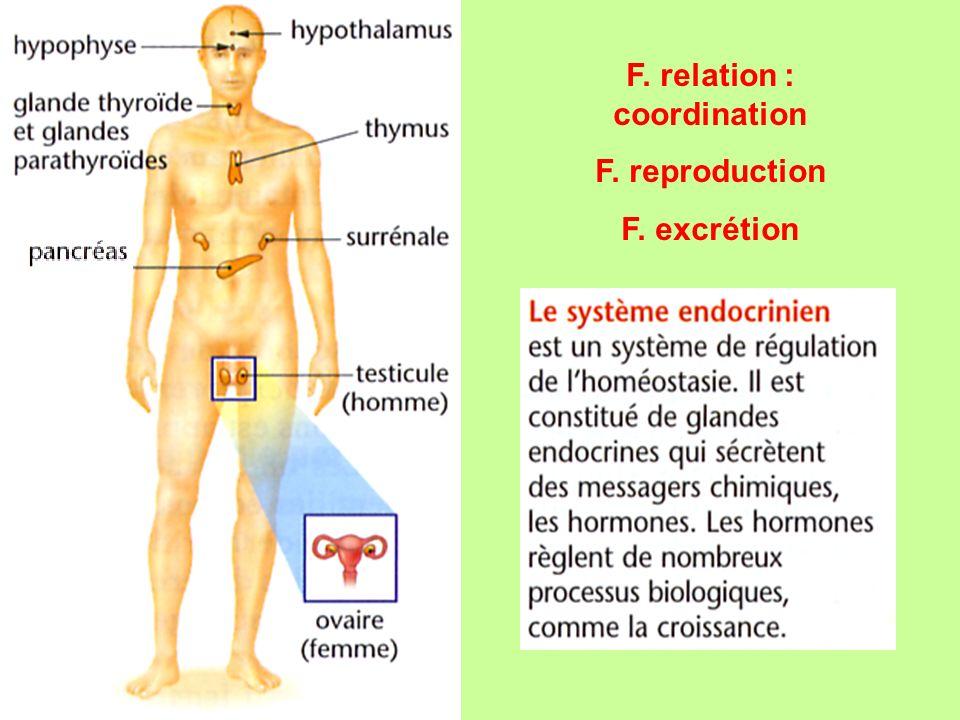 F. relation : coordination