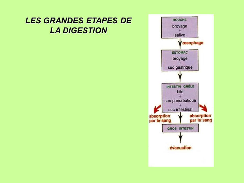 LES GRANDES ETAPES DE LA DIGESTION