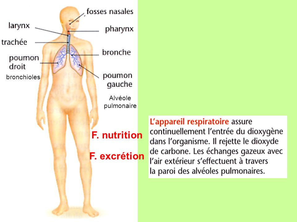 F. nutrition F. excrétion