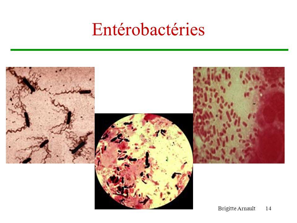 Entérobactéries Brigitte Arnault