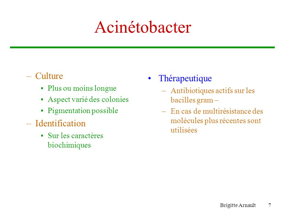Acinétobacter Culture Thérapeutique Identification