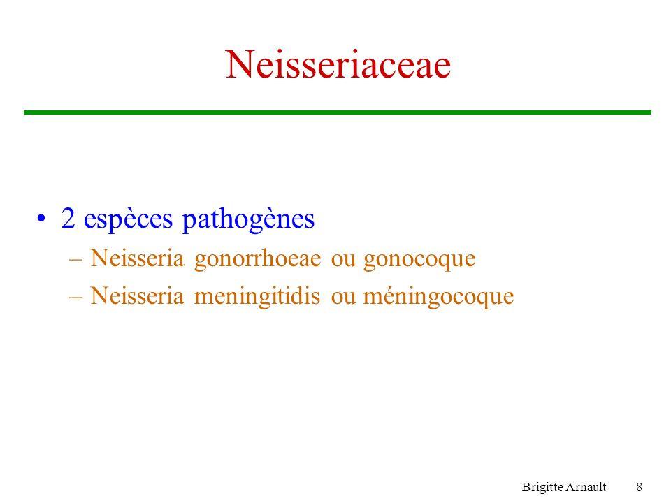Neisseriaceae 2 espèces pathogènes Neisseria gonorrhoeae ou gonocoque