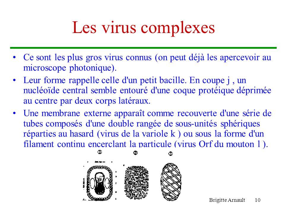 Les virus complexes Ce sont les plus gros virus connus (on peut déjà les apercevoir au microscope photonique).