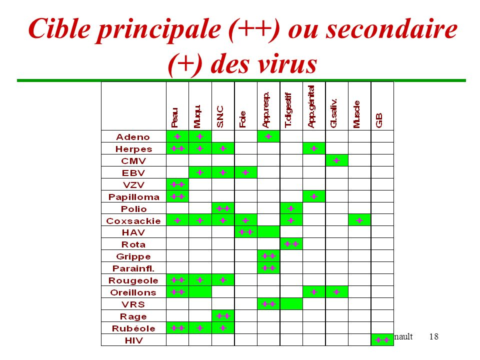 Cible principale (++) ou secondaire (+) des virus