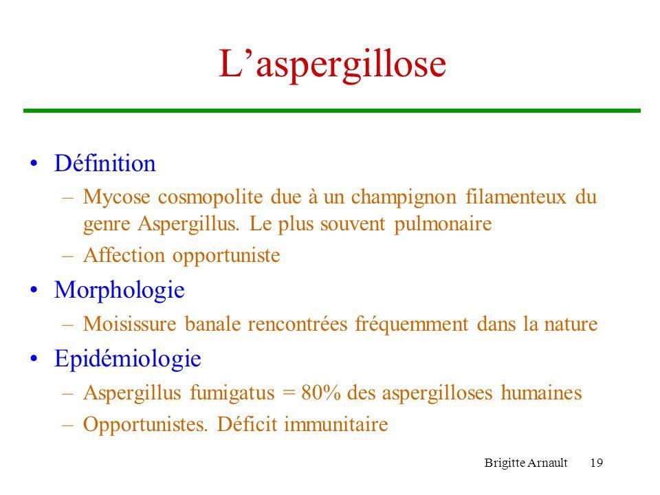 L'aspergillose Définition Morphologie Epidémiologie