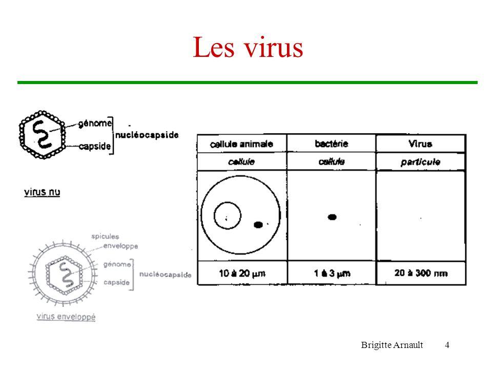 Les virus Brigitte Arnault