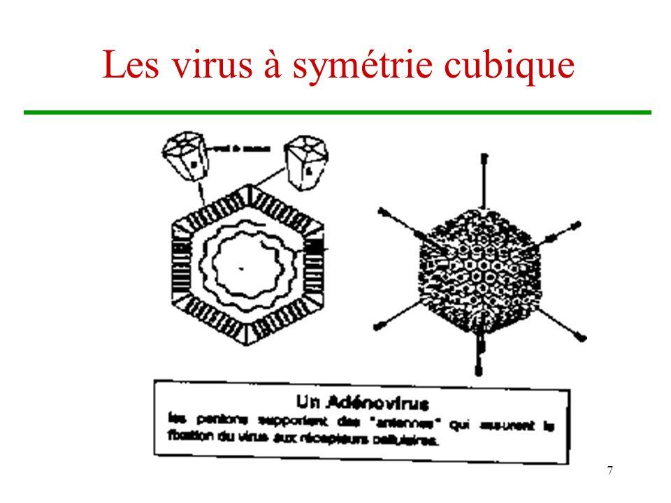 Les virus à symétrie cubique