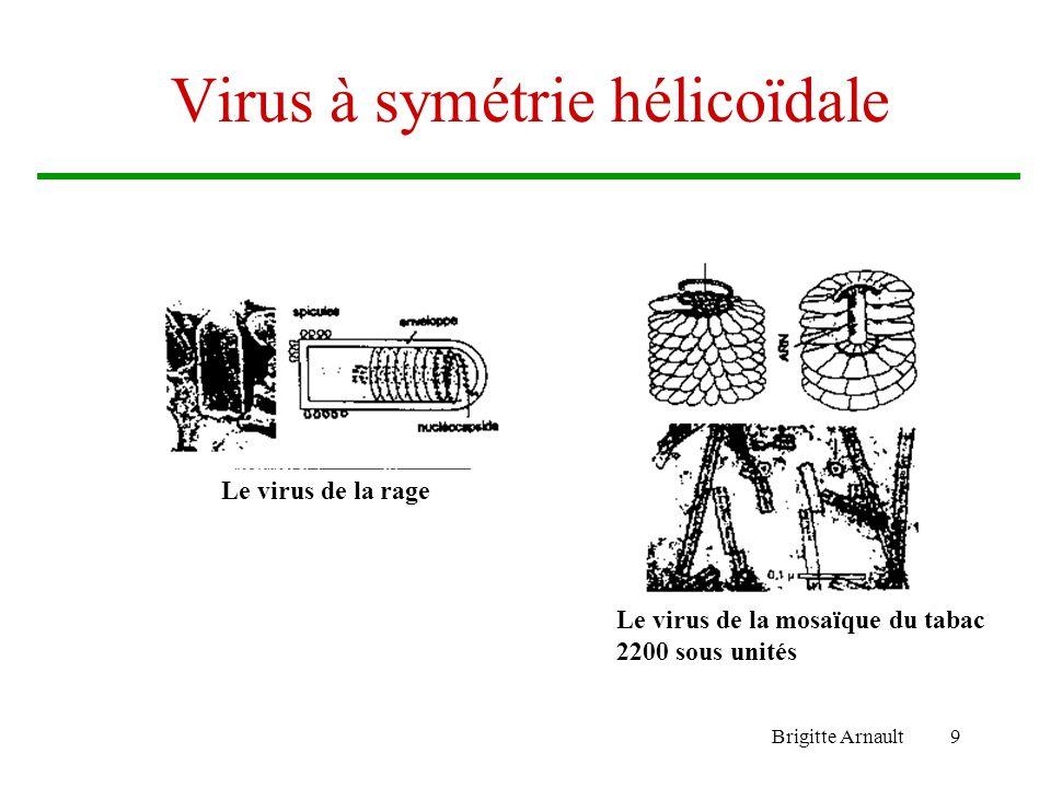 Virus à symétrie hélicoïdale