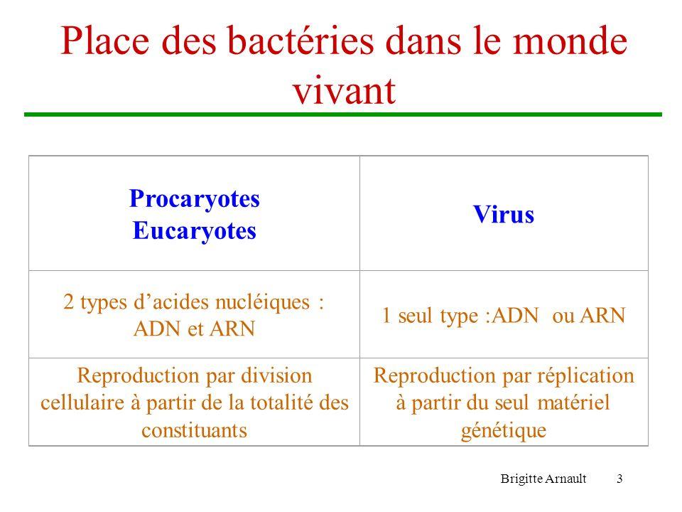 Place des bactéries dans le monde vivant