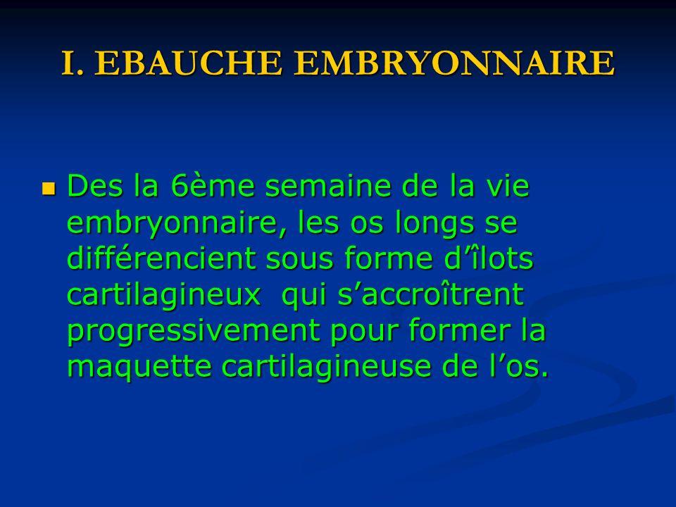 I. EBAUCHE EMBRYONNAIRE