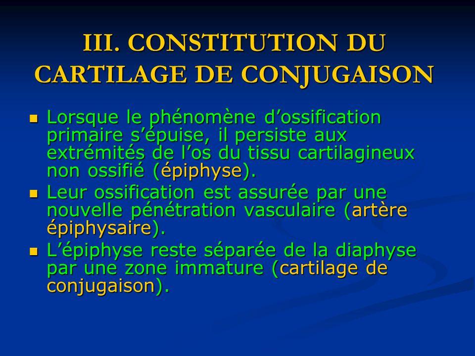 III. CONSTITUTION DU CARTILAGE DE CONJUGAISON